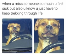 Stay Strong Doggo