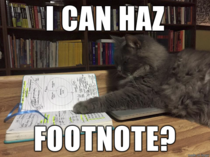 Studious Cat is well annotated