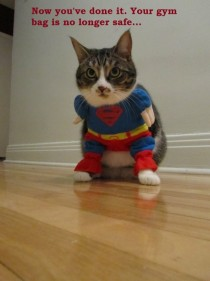 SuperKitty is notamused