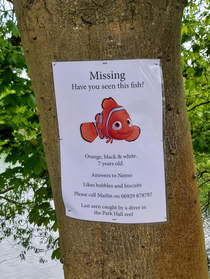 Surely needs to be shared on social media everywhere to maximise the chances of reuniting Nemo with his owner