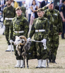 Swedish army goat