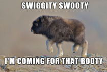 Swiggity Photos Meme Guy #dog #excited #pup #im so excited #swiggity #swooty #swiggity swooty. meme guy