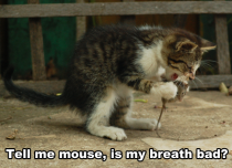 Tell me mouse