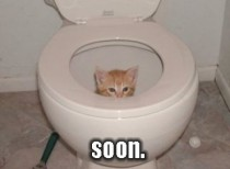 terrifying toilet cat
