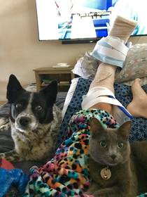 Thank goodness I have Dr Dog and Dr Cat here to nurse me back to health