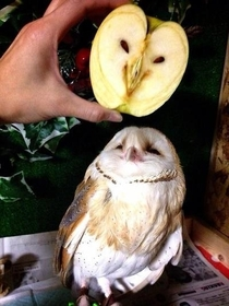 That apple looks marvelous darling