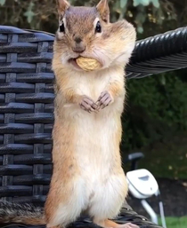 That peanut is mine all mine