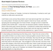 The best flea trap review youll read today