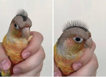 The best use Ive ever seen for false eyelashes