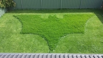 The bosses wife asked him to mow the lawn This is what she got