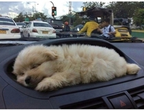 The car with a puppy holder