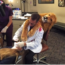 The Dentist that Killed Cecil the Lion