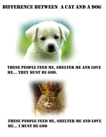 The difference between a cat and a dog