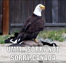 The Eagle has landed on top of a Canadian Goose