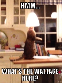 The electrician cat - continued