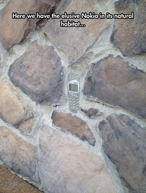 The elusive Nokia seen in its natural habitat