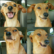 The four phases of him finding out I pet another dog