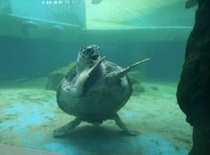 The happiest turtle you will ever see