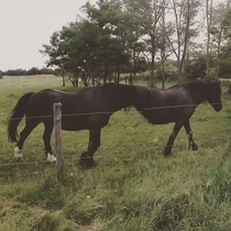 The horse moved as I was taking a panorama I present you the horsetaur Half horse half another horse