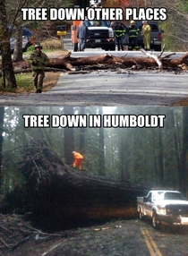 The Joys Of Living In The Redwood Forest