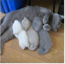 The Kitten Color Printer Ran Out Of Ink Mid Job