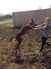 The moment my sister was punched in the face by a horse