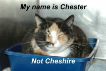 The names Chester not Cheshire