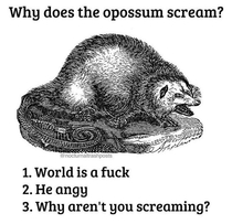 The opossum has a right to scream