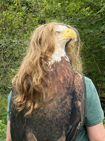 The rare and elusive not-so-bald eagle