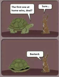 The real hare and tortoise