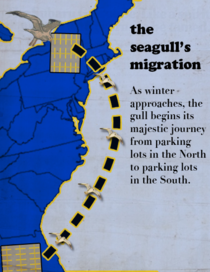 The Seagulls Migration
