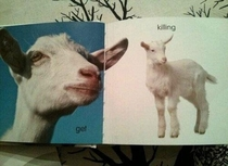 The Swedish word for Goat is Get and the word for Kid is Killing hence this spread from a childrens book