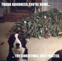 The tree fainted