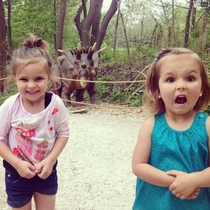 The two possible reactions to seeing a dinosaur