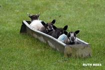 The Welsh bobsleigh team