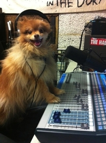 The worlds happiest canine DJ