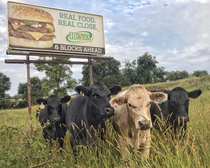 These cows are thoroughly unimpressed with their new billboard