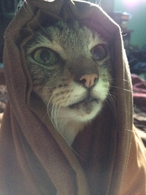 These sands are cold but Khajiit feels the warmth of your pesence