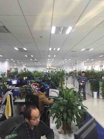 They must have really enjoyed the plants increase productivity study here in China