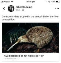 Things started to heat up at the annual Bird of the year competition
