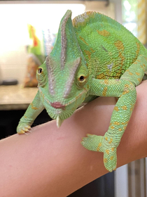 Things you dont think you will have to tell your kids  Please do not use my good lipgloss on the chameleon