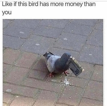 This bird has more money than me