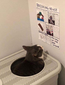This cat has a newspaper to read while it uses the litter box