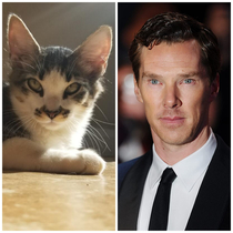 This Cats Eyes Sorta Remind Me Of Benedict Cumberbatch