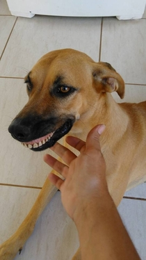 This dog in Brazil found some dentures