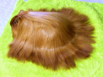 This guinea pig has nicer hair than me