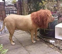 This guy put a wig on his dog to scare his neighbors