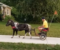 This guy riding through my Hometown in a pony chariot
