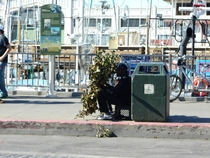 This homeless guy in San Fran was hiding behind a couple of branches and scaring people After he scared me some lady yelled he made you holla Give him a dolla