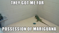 This iguana is in some legal drama